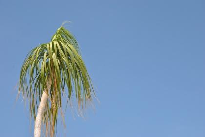 Summer Holiday 2012 146